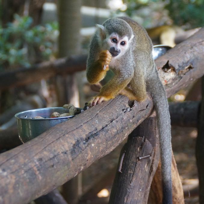 Monkey Jungle and ZIP-line adventures
